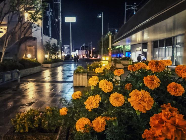 雨の夜マリーゴールド