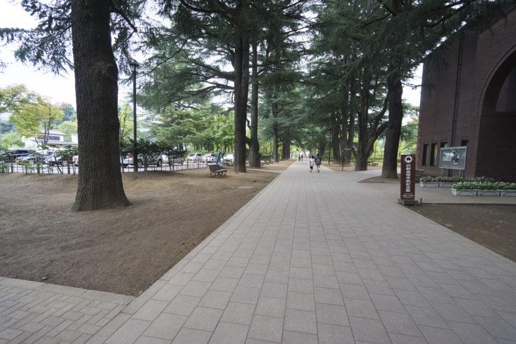 あがたの森通路ヒマラヤ杉