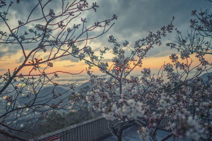 白峰展望台の夕焼け桜3