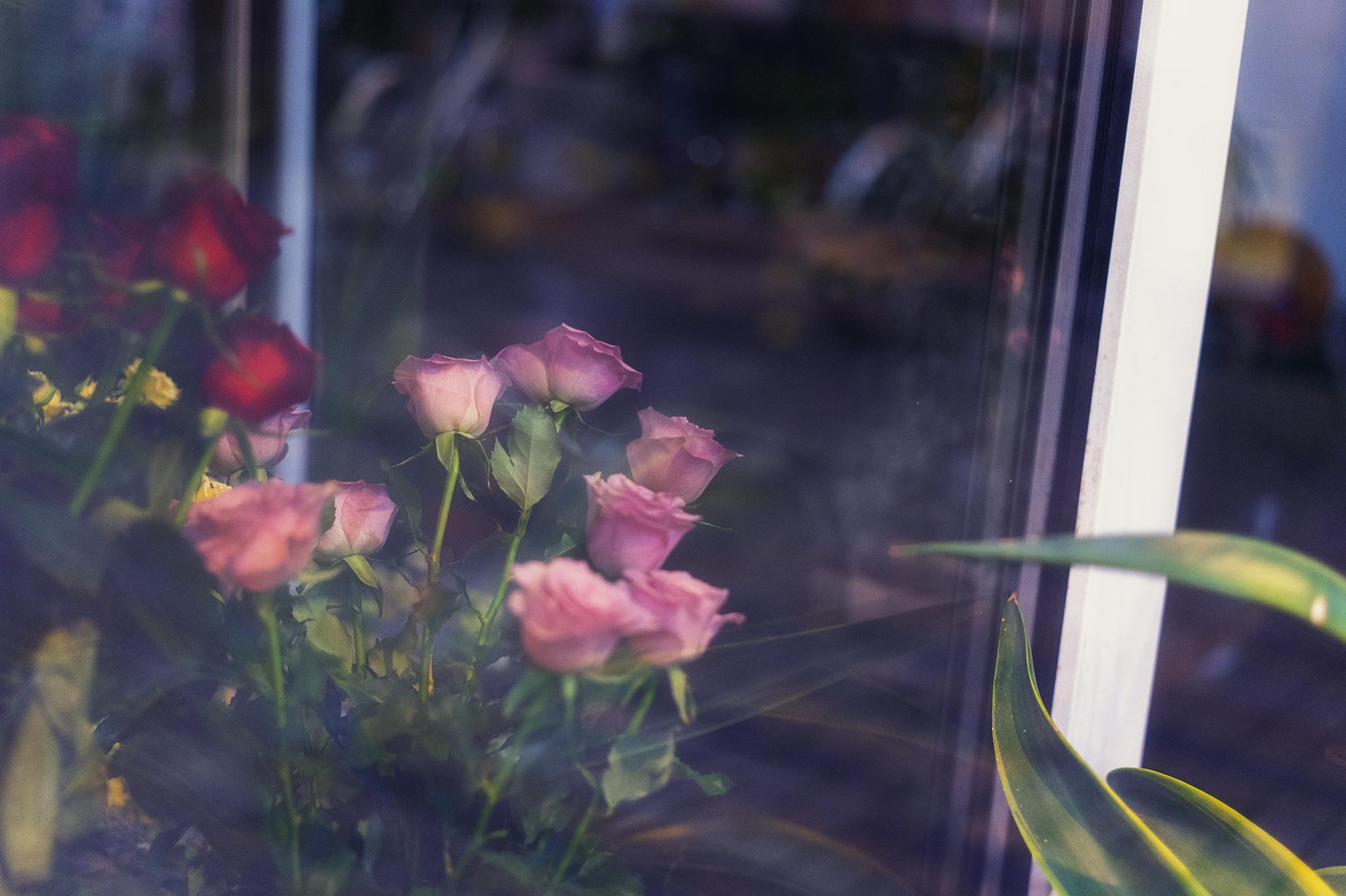 夜に咲く花のスナップ写真【ZEISS Loxia 2/50】