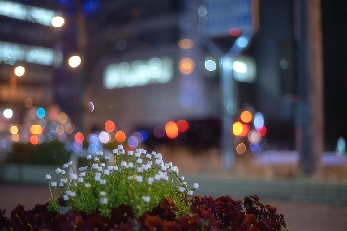 夜の街に咲く花