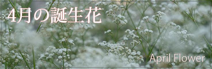 4月の誕生花2