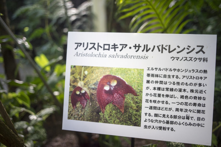 牧野植物園のダースベイダー解説