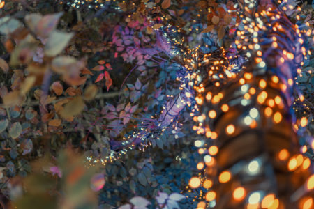 丸亀町グリーンのイルミネーションツリー